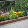 屋上小花壇