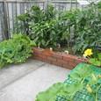 屋上箱庭菜園